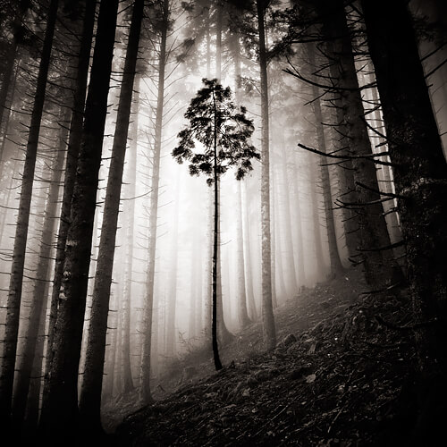 New Friend<p>© Ebru Sidar</p>