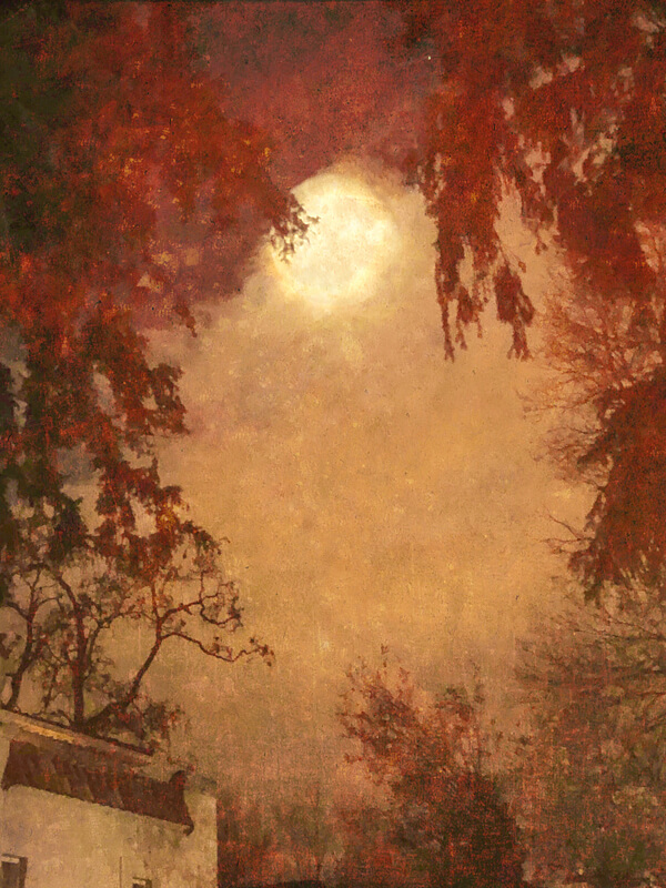 An Evening with the Moon<p>© Wendi Schneider</p>