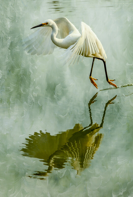 Egret Reflected<p>© Wendi Schneider</p>