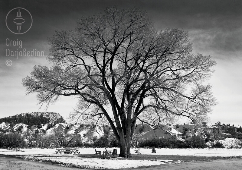 Wisdom Tree Ghost Ranch<p>© Craig Varjabedian</p>