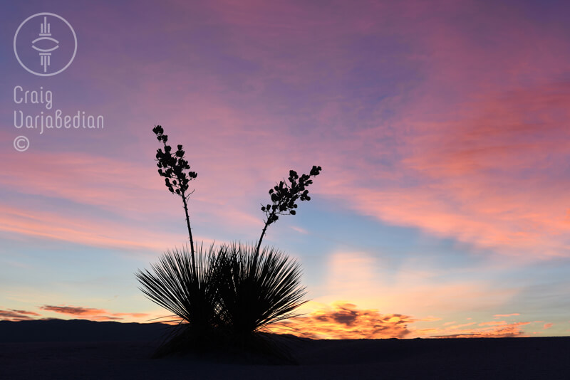 Yuccas at Sunrise, White Sands<p>© Craig Varjabedian</p>