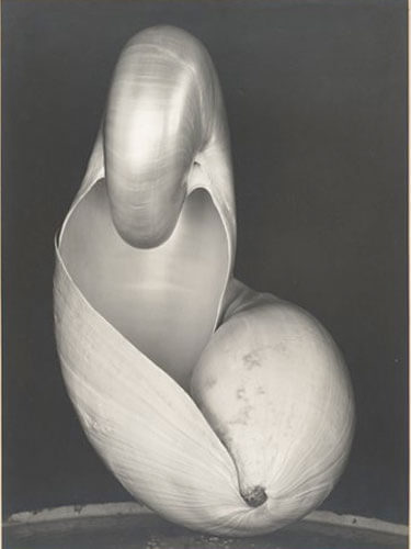 Two Shells, 1927<p>© Edward Henry Weston</p>