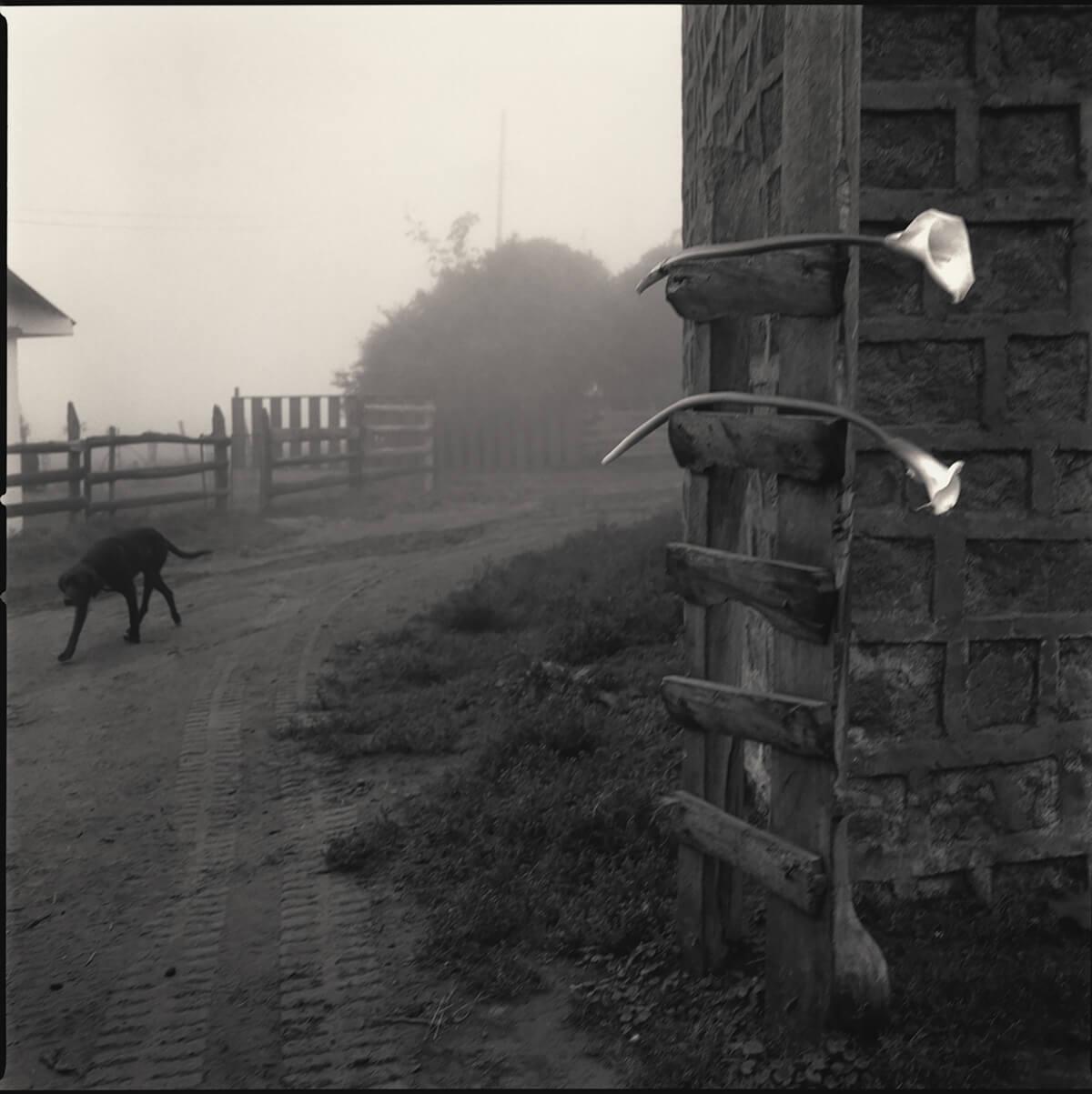 Hiroshi Watanabe Photographer All About Photo
