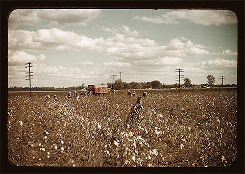 Marion Post Wolcott - Day laborers picking cotton near Clarksdale, Mississippi, in late 1939. ©Library of Congress