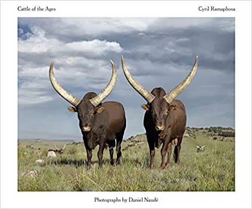 Cattle of the Ages: Ankole cattle in South Africa