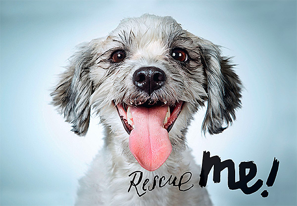 Rescue Me: Dog Adoption Portraits and Stories from New York City